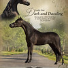 DHTC World Ad Dazzle
