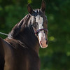 Gypsey filly-823 fin