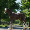 Gypsey filly-816 fin