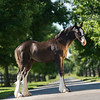 Gypsey filly-807 fin