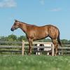 Justins horses-116