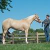 Justins horses-101