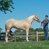Justins horses-100