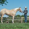 Justins horses-106