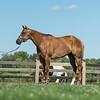 Justins horses-115