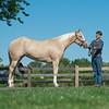 Justins horses-104