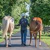 Justins horses-127