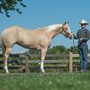 Justins horses-107