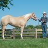 Justins horses-105