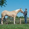 Justins horses-103