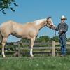 Justins horses-108