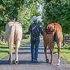 Justins horses-126