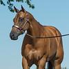 Justins horses-114