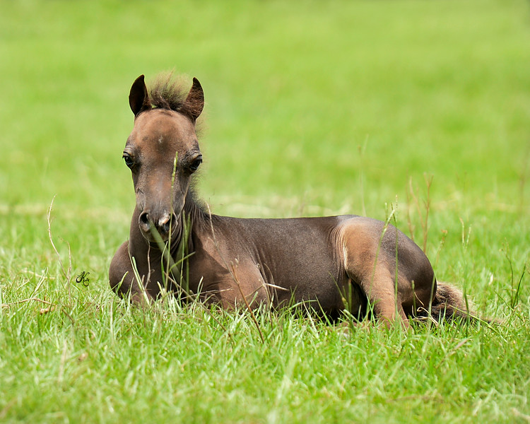 Catalina filly