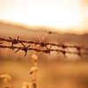 barbed-wires-picjumbo-com