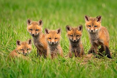 Foxy Five.