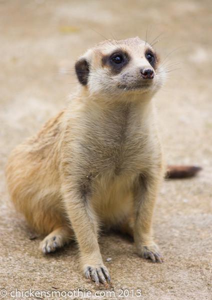 Small Mammals (wild)
