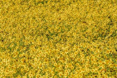Millions of Monolopia