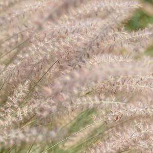 Detail, Grasses