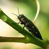 Beetle Bestie