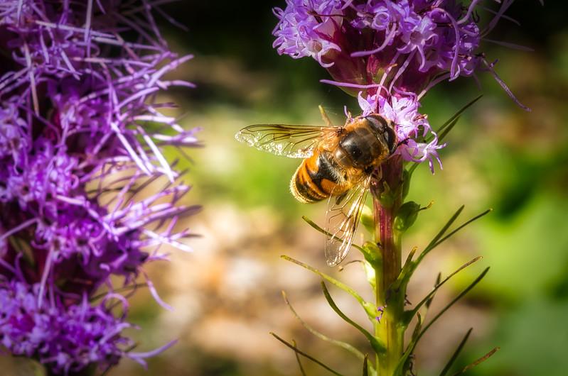 Sunny Days and Nectar