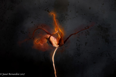 """""""Orchid Composition in Decomposition"""""""