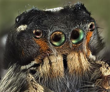 spider 27 jul 19 B