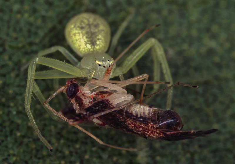 uncertain id of prey