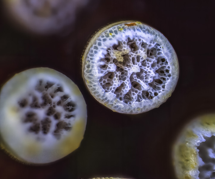 128 x magnification