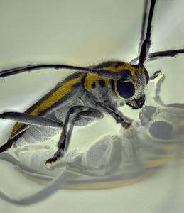 Beetle reflected in plastic vial