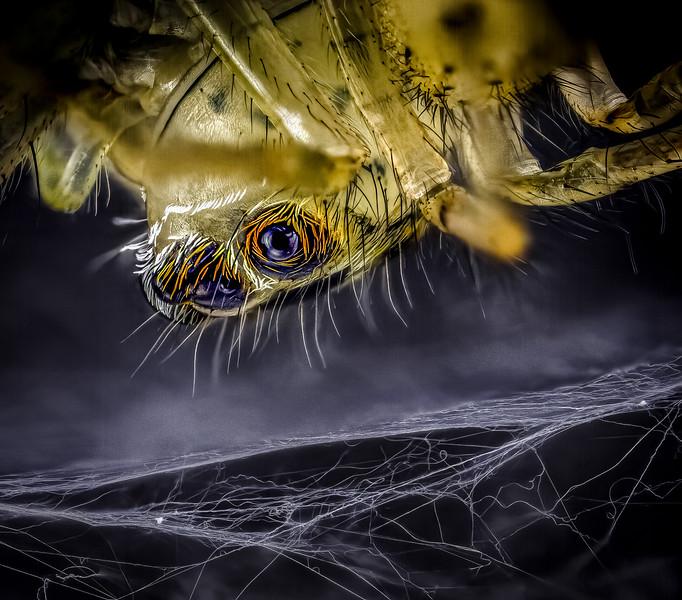 Eye on her web