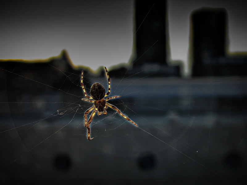 Spider on a web constructed outside a window on the 11th floor of a hotel overlooking Montreal.