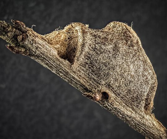 unknown; spider nest?