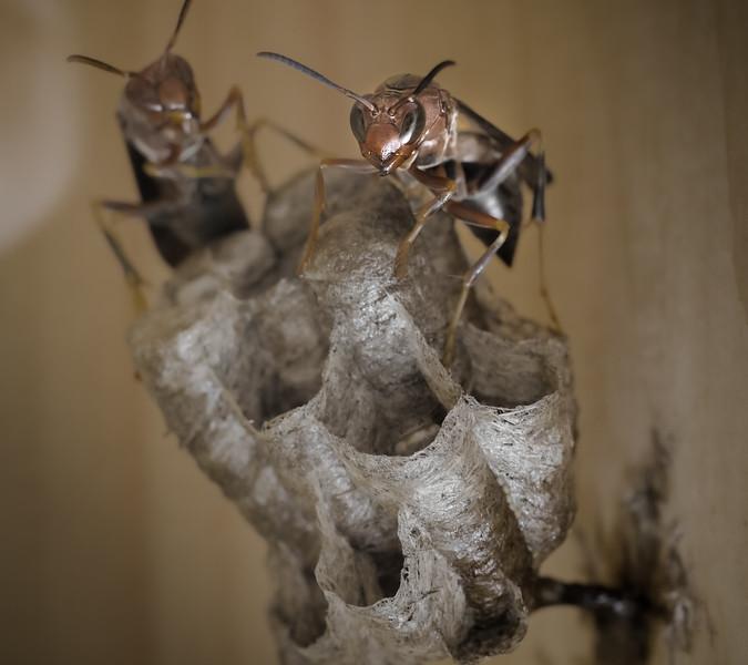 Wasp nest through a window