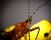 Assassin bug 20 oct 15