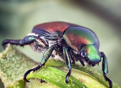 Beetle  19 jul 18
