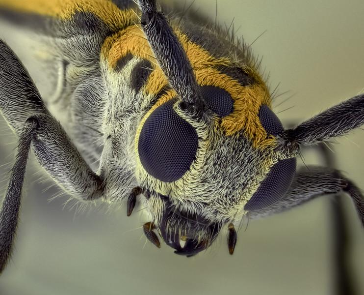 Beetle  1 jun 17