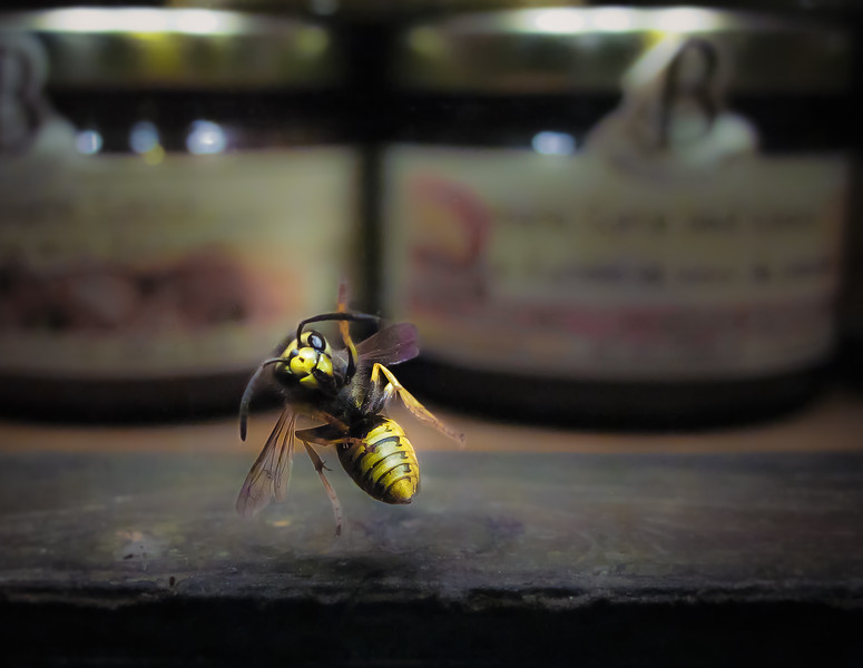 window of jam and jelly store; smile on the wasp's face indicates she got into some product