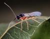 Wasp 6/4/18