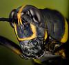 Grasshopper  19 apr 17