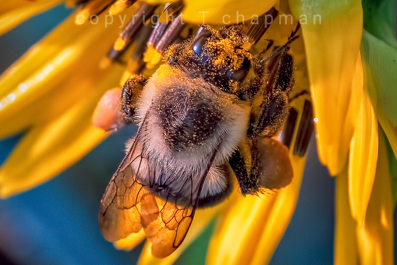 Covered in Pollen
