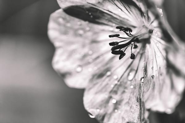 tears of beauty
