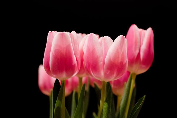 pink troop