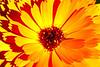 Image #9530<br /> Botanical Gardens ~ Ontario, Canada