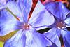 Image #9576<br /> Botanical Gardens ~ Ontario, Canada