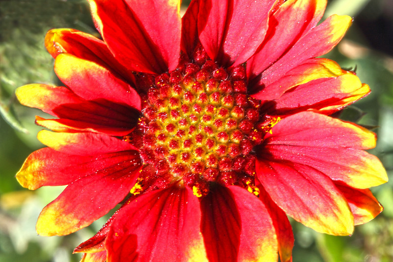 Image #9560<br /> Botanical Gardens ~ Ontario, Canada