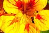 Image #9550<br /> Botanical Gardens ~ Ontario, Canada