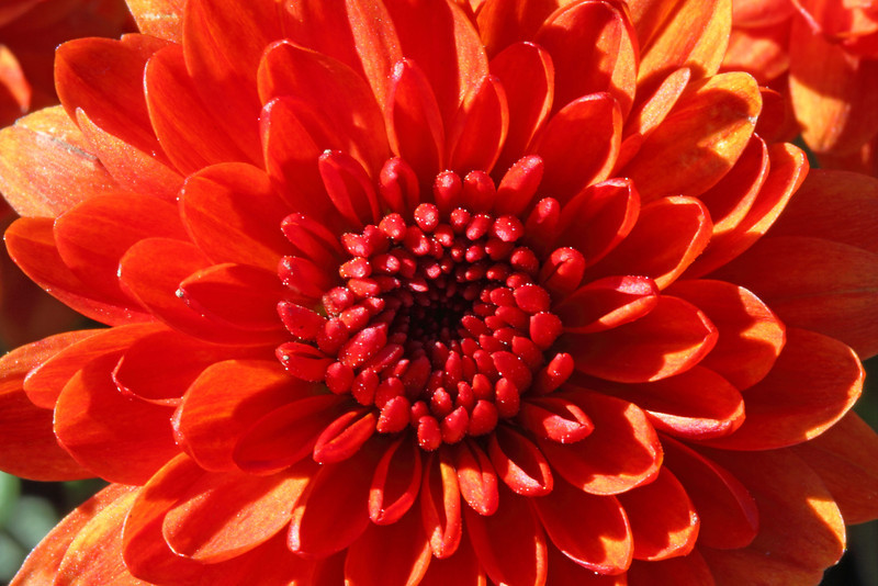 Image #9585<br /> Botanical Gardens ~ Ontario, Canada