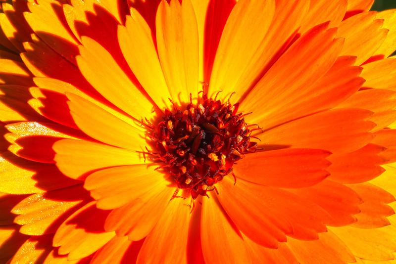 Image #9526<br /> Botanical Gardens ~ Ontario, Canada