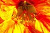 """DRAGON FIRE"" Image #9536<br /> Botanical Gardens ~ Ontario, Canada"